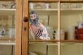 'mangiafoco ou stromboli le marionnettiste de pinocchio - marionnette - pièce originale