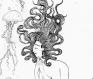 'la femme et les méduses' impression numérique