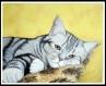 Chat sur coussin huile sur toile portrait-peinture chat