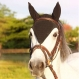 Bonnets chevaux,  au crochet