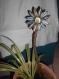 Fleur en capsules à piquet, intérieur/extérieur