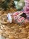 Coffret naissance : ensemble bavoir bandana + anneau de dentition assortis
