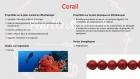 Bracelet en perles naturelles 6 mm : corail et howlite