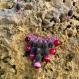 Collier en graines naturelles : perles du zanzibar