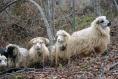 Chaussettes  tricotées à la main 100% laine naturelle enfant 6 à 12 mois
