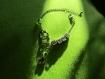 Bracelet chaîne lyme