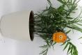 Décoration de plantes - monstre orange rigolo - verre fusionné