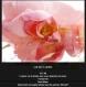 Le lot de cartes postales rose romantiques
