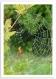 Carte postale a6 toile araignée