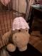 Bonnets bob pour bébés