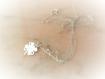 Collier trèfle à 4 feuilles chance argent massif 925,porte bonheur,délicat,fin,ras de cou,nature,pendentif,grigri,femme,fille