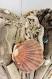 Coeur en bois flotte et coquillages (modèle unique)