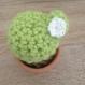 Cactus rond / décoration d'intérieur