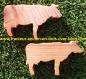Magnet vache