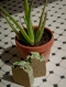 Aloe vera savon artisanal