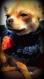 Foulard tube pour chien