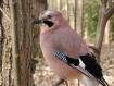 22 plumes duvet geai gris vieux rose
