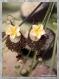 Boucles d'oreille fleurette bronze