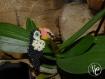 Sacha le toucan