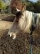 Collier d'attache pour chevaux