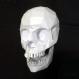 Projet diy papercraft: crâne humain