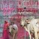 Vache rose - toile 80 x 80 cm