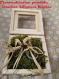 Porte alliances mariage champêtre rustique nature
