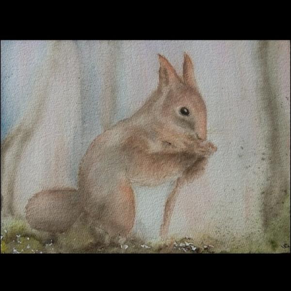 L écureuil Roux Grignotte Art Peintures Par Felibou