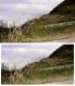 Photographie - montée violette