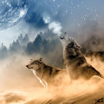 Set de table, design original et moderne. matière plastique, esthétique, lavable et résistant - animaux - loups sous le clair de lune hivernal.