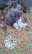 Perles de prières pour chakra couronne 'la source
