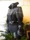 Non-standard ladies' coat made of woolen fabric