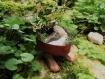 Jardin nomade : jardinette