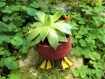 Jardin nomade : canard