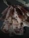 Jabot en tissu fleuri et dentelle rose pale