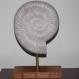 Grande ammonite en bois
