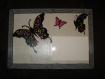 Cadre photo papillons avec personnalisation de votre choix