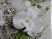 Pic à chignon, orchidée blanche