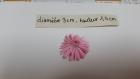 Lot de 10 belles fleurs en papier divers couleurs