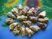 Lot de 18 l'huître creuse percée et vernis pour votre créativite pour décoration -idéal pour la fabrication de bracelets ou de colliers