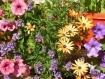 Set de table photo original plastifié semi-rigide fleurs composition florale réf f8