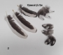 10 plumes de coq wyandotte noir a liseré blanc