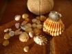 Bague - coquillage en argent - inspiration