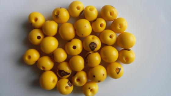 Perle graine açaï jaune (lot de 30 perles)