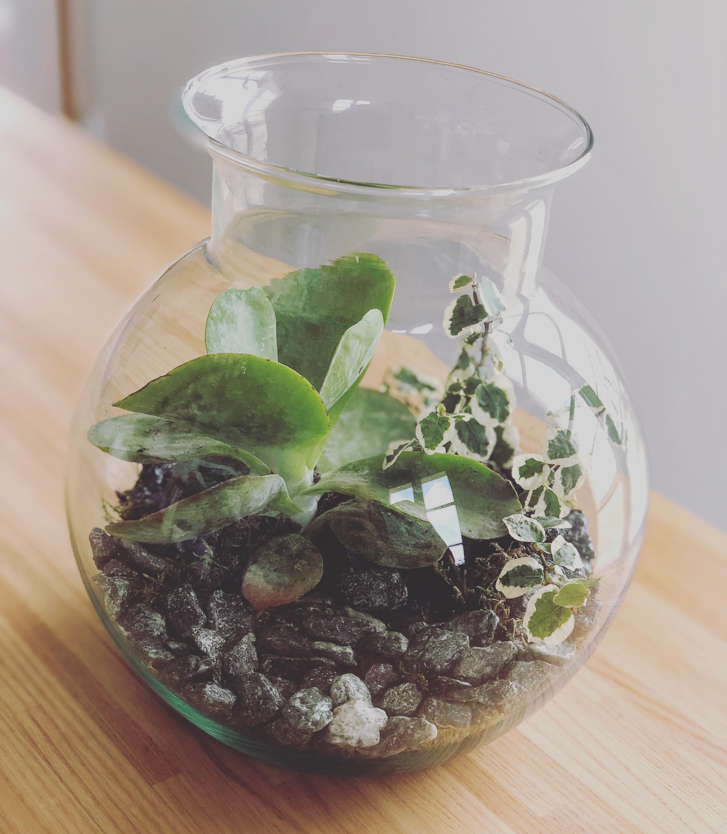 Terrarium Fermé Plante Grasse terrarium plante grasse
